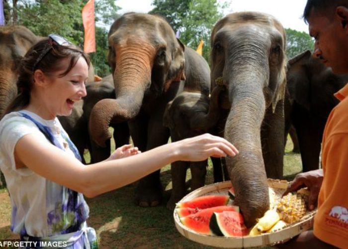 Elephants-Tourist-Feeding-Pinnawala