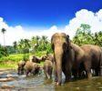 Pinnawala-Elephant-Orphanage-4
