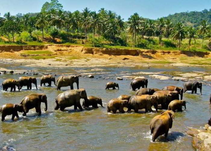 Pinnawala-Elephant-Orphanage-5