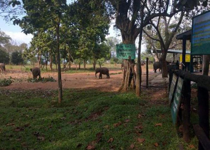 udawalawe-elephant-orphanage-4