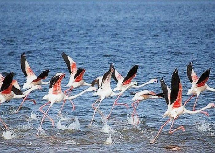Wirawila birds
