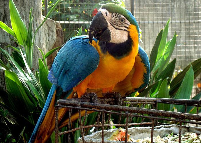 zoo-Dehiwala
