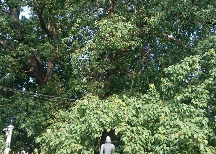 Temple Kelaniya Bo tree
