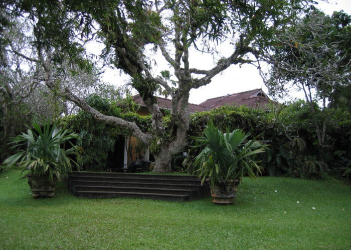 Brief Garden tree of Bevis Bawa