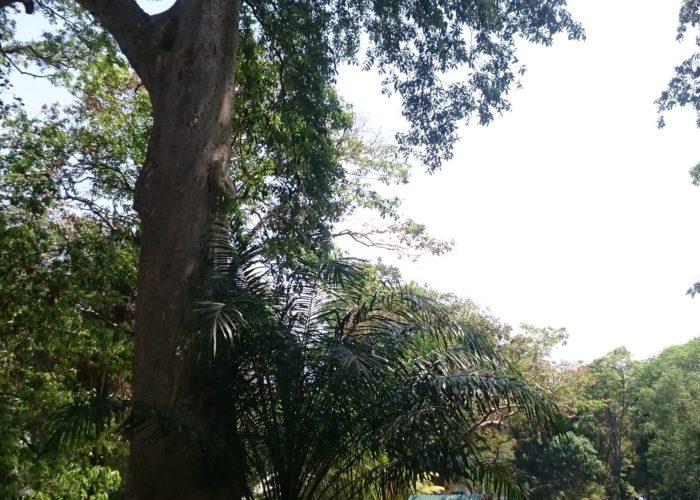 Tree Park Victoria