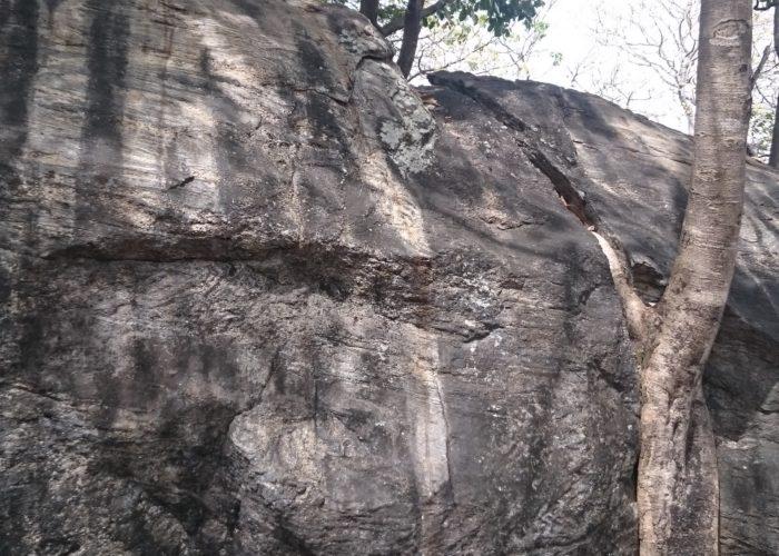 Dambulla cave temple tree