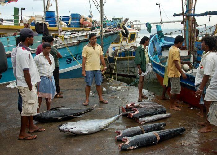 Fish Market 1 Beruwala