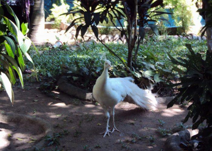 Guruge 3 Nature Park