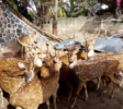 Guruge 7 Nature Park