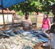 Hikka Fish market