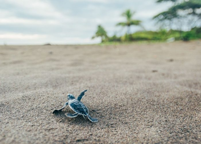 Kosgoda Sea Turtle Conser
