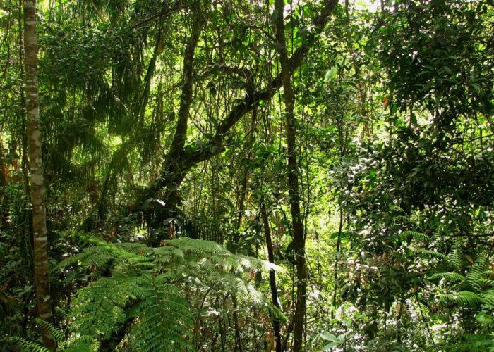 Kottawa Reserve Forest 1