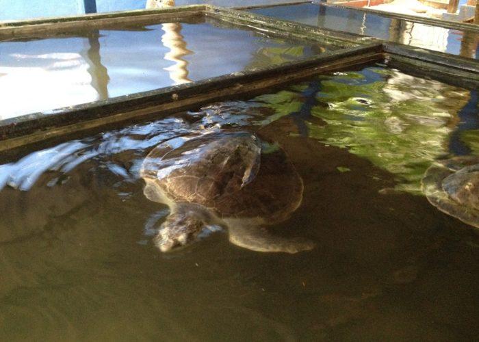 Sea Turtle Farm & Hatchery 3