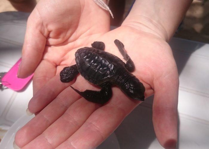 Sea Turtle Farm & Hatchery 8
