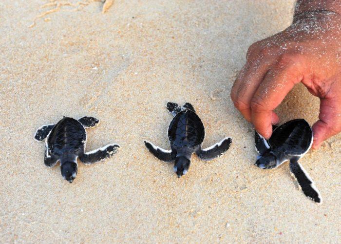 Sea Turtle Farm & Hatchery 6