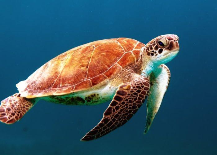 Sea Turtle Farm & Hatchery 7