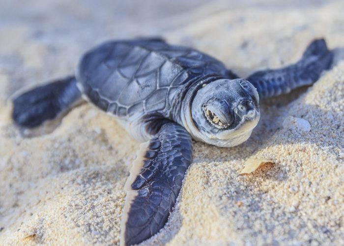 Sea Turtle Farm & Hatchery 10