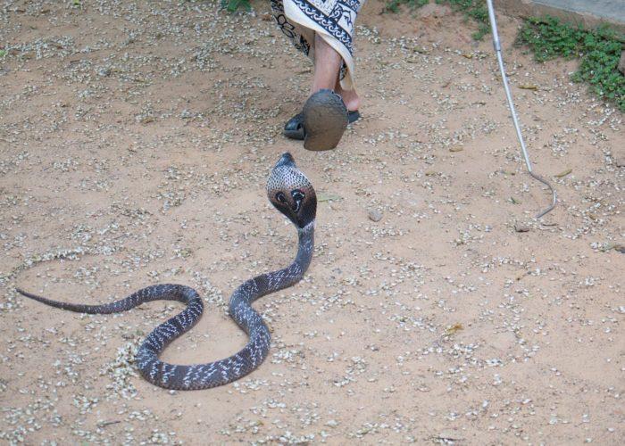 Sri Lankan Snake Farm 3