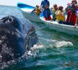 Whale dolfine Watch Mirissa