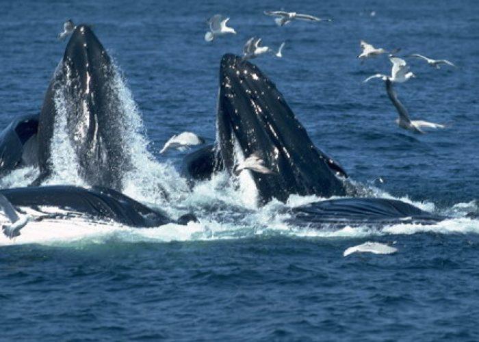 Mirissa Whale dolfine Watching