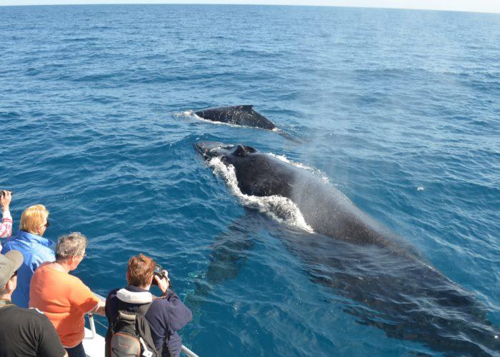 Whale boat Watching Mirissa