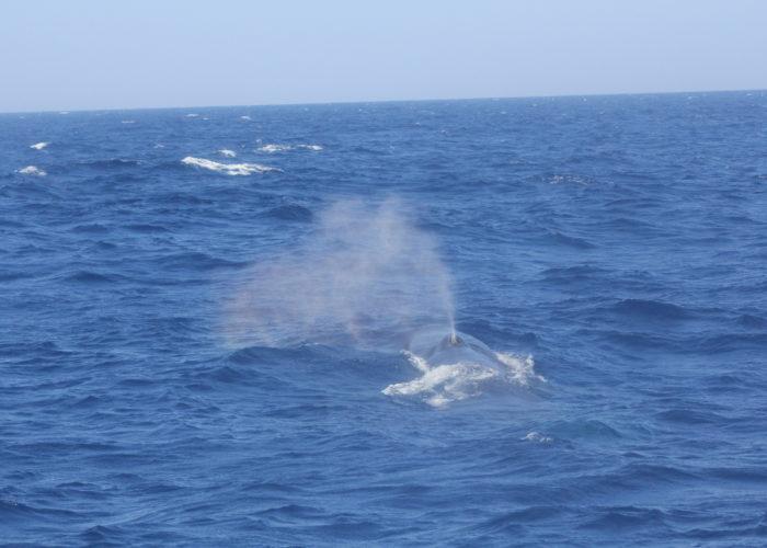 Blue Whale Trincomalee