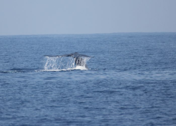 Blue Whales Trincomalee