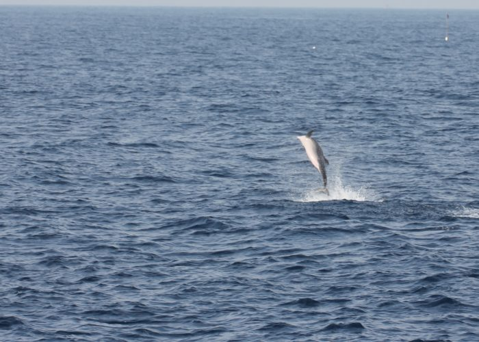 Dolphins Whales Trincomalee