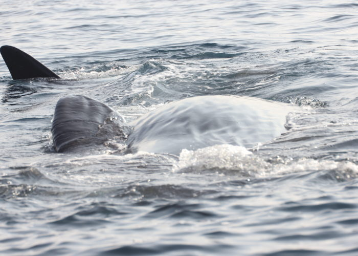 Trincomalee Whales watch